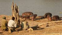 Walking Safari in South Luangwa