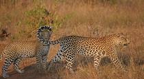 6 Night Self Catering Safari in the Timbavati & Sabie Sands