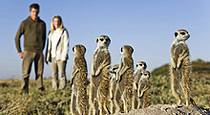 Meerkat encounter at Planet Baobab, Botswana