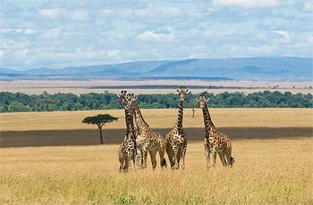 Masai Mara near Kichwa Tembo Tented Camp