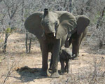 Accommodated - Kruger & Swaziland Overland Tour
