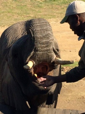 Botlierskop Game Reserve, Elephant experience