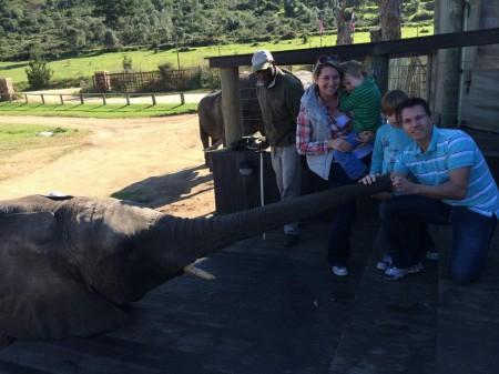 Elephant experience Botlierskop