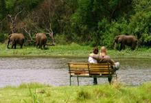 elephants on a Botswana Safari