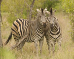 20 Day South African Explorer Tour - Accommodated