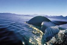 Whale near Cape Town