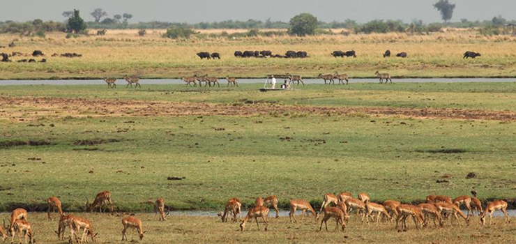 Vast herds of wildlife grace the Chobe River flood plains