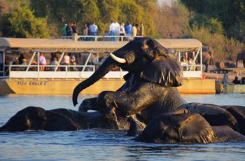 Boat based game viewing, Chobe Safari Lodge, Botswana