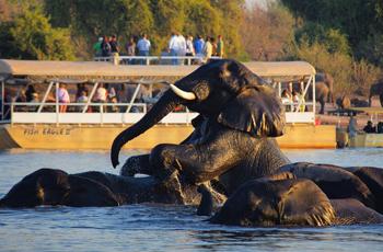 Boat Safari, Chobe Safari Lodge, Botswana