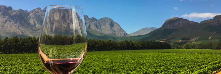 The Cape Winelands is where South Africa's finest wines are grown