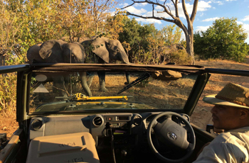 On safari at Elephant Valley Lodge