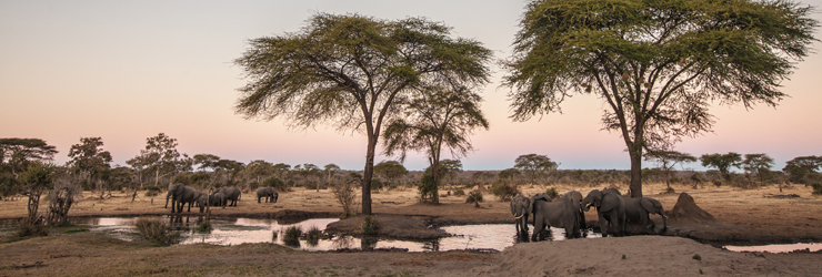 Elephants are a regular sighting in the area