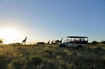On a guided safari at Falaza