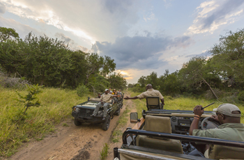 Game Drives are conducted in open vehicles with professional guides
