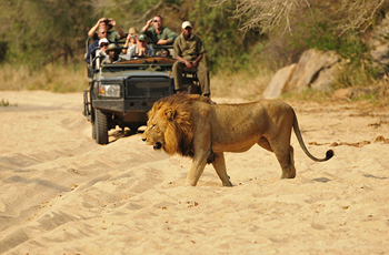 Open Vehicle Safari, Inyati Game Lodge, South Africa