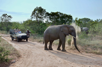 Open Vehicle Safari, Kapama Game Reserve, South Africa