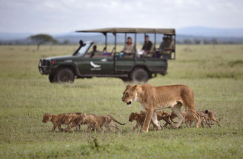 Lioness & cubs, Serengeti, Tanz ania