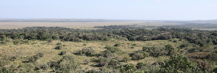 Lake St Lucia is part of the Isimangalsio Wetland Park
