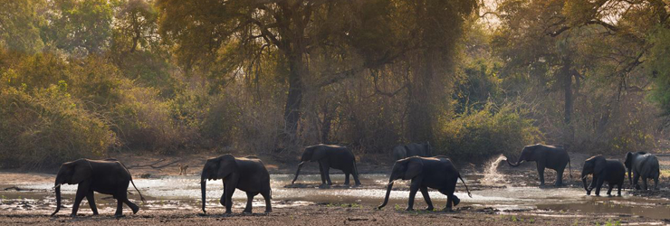 Elephants near Kanga Safari Camp, Lower Zambezi, Zimbabwe