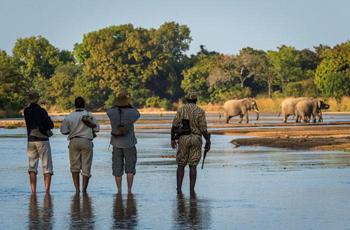 Walking Safari at Kapamba Bush Camp, Zambia