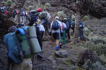 Hiking up Kilimanjaro