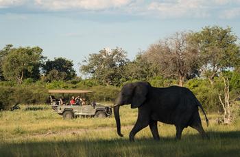 Elephant sightings in northern Botswana are almost gaurenteed