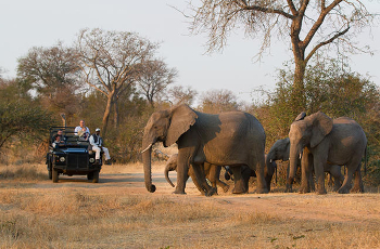 Herd of elephant, Sabie Sands Game Reserve, South Africa