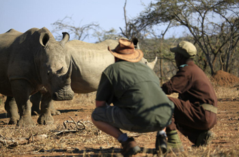 Game walks are also an option at Mkhaya Game Reserve