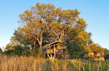 Big trees offer good shade, Nakasa Lupala