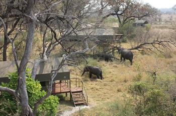 Luxury tented accommodation, Nkasa Lupala