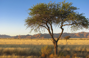 Namibia offers vast and varying desert landscapes
