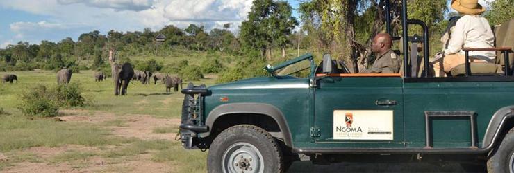Guided Game Drive at Ngoma Safari Lodge