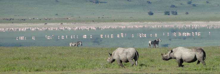 Ngorongoro Crater is famed for exceptional game viewing