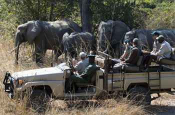 Open Vehicle Safari, Nkwali Camp, Zambia