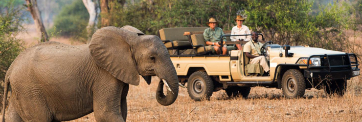 Open Vehicle Safari at Nsefu, Zambia