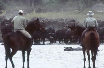 Viewing hippo from horseback, Okavango Delta