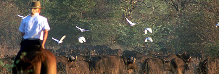 Viewing buffalo from horseback - Okavango Delta