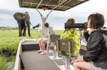 Game Viewing by tender boat