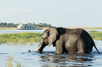 Some of the best elephant sightings are seen from boat based safaris