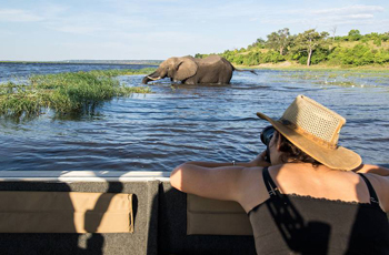 On Safari, Chobe River