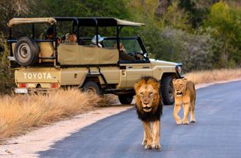 On safari, Rhino Post Safari Lodge, Kruger Park