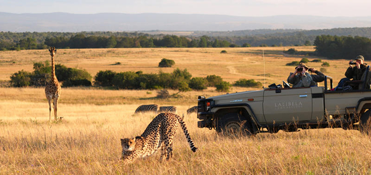 The big 5, as well as cheetah can be seen in the Eastern Cape