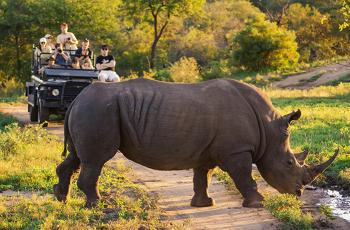 Adjoing the west edge of the Kruger Park lies most of the famous private reserves