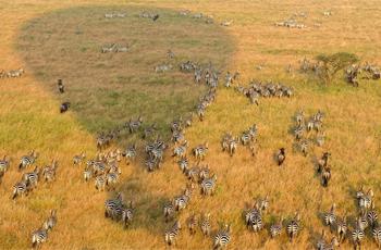 Balloon Safari in the Serengeti, Tanzania