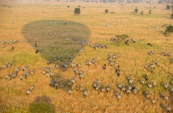 Hot Air Balloon Flight over Serengeti