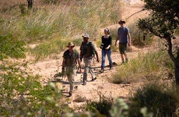Walking Safaris are also an option at Shindzela