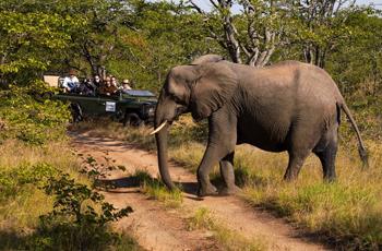On safari at Shindzela Tented Safari Camp