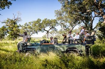 Open vehicle game drive (safari) at Singita Ebony