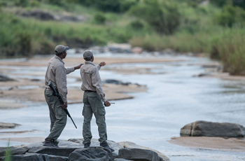 Experienced rangers & trackers guide your safari experience