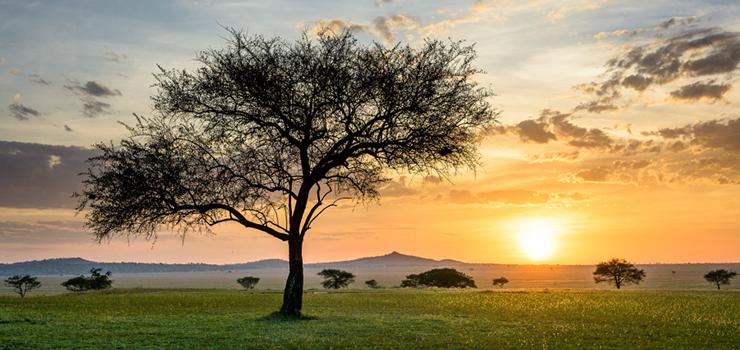 Serengeti near Singita Sabora